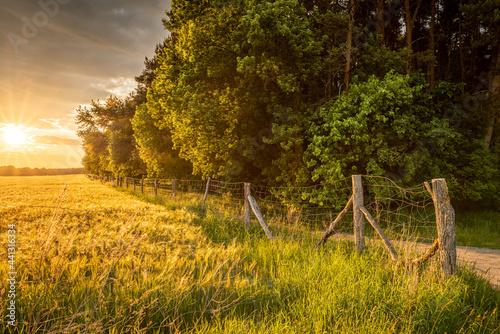 sielski zachód słońca na skraju lasu nad polami i łąkami