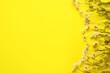 Leinwandbild Motiv Beautiful chamomile flowers on color background