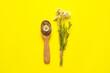 Leinwandbild Motiv Spoon with dried and fresh chamomile flowers on color background
