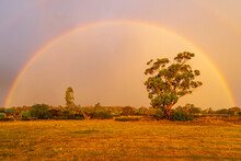 A Rainbow And Dramatic Lighting Over A Large Gum Tree