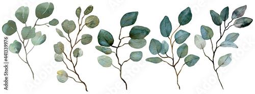 Fotografie, Obraz Watercolor Eucalyptus collection