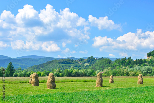 Fototapeta Field with haystacks in the sunny day