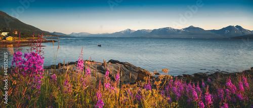 Fotografia Bright beautiful landscape of the seashore in Tromso Novergia, blooming summer l