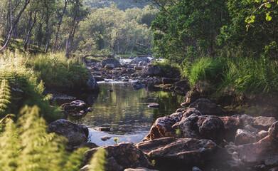 Mountain river. Beautiful forest summer landscape