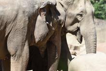 Nahaufnahme Von Elefanten, Details