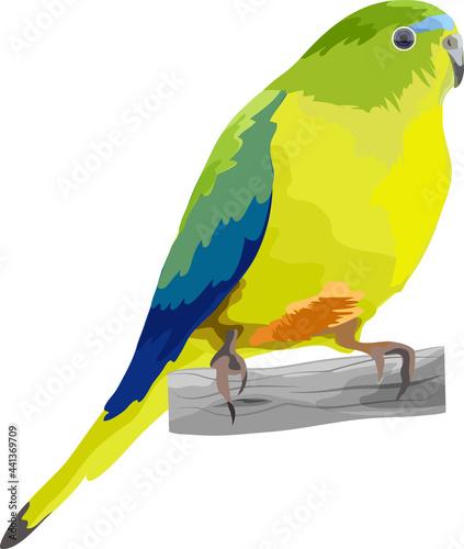 Fotografia A songbird sits on a branch