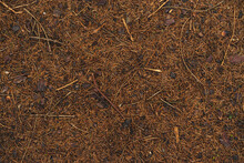Pine Bumps And Needles Lying On The Ground. Organic Texture.