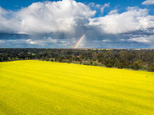 Looking Down On A Yellow Crop Of Canola Below Storm Clouds And A Rainbow