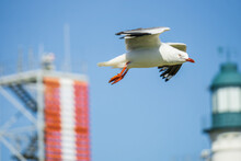 A Seagull Hovering In The Air Between A Lighthouse And A Tower