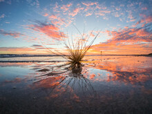 A Dried Seed Pod Stuck In Wet Sand In Front A Sunset Sky