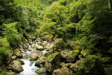 徳島県海陽町 轟九十九滝 遊歩道からの風景