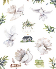 Pigeons Watercolor Set Of Flying Birds. Hand Drawn Watercolor Isolated Illustration For Wedding, Invite, Greeting Card Vintage Style With Ruins