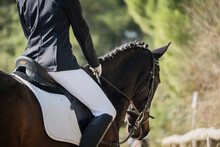 Anonymous Female Equestrian Riding Chestnut Horse In Paddock