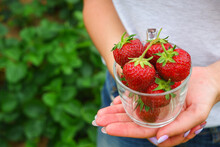 Vitamins From The Garden. A Young Sports Woman In Shorts And A T-shirt In A Summer Garden Holds A Glass Cup With Red Ripe Strawberries In Her Hands. Healthy Eco Breakfast.