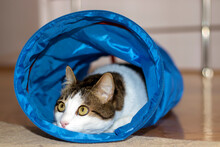 House Cat Sitting And Playing Inside The Cat Tunnel Toy.