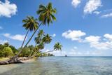 Fototapeta Paryż - Palm trees on the beach