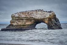 Natural Arch In Santa Cruz, California With Nesting Cormorants