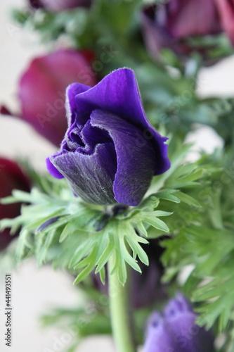Fotografering flower, nature, blossom, petal, background, spring, botany, florist, bloom, beau