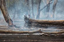 Fire Burning In Remnant Vegetation