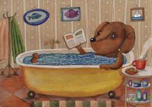 The Dog Is Taking A Bath