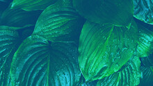 Dark Green Leaves Texture Background. Tropical Leaves. Leaves Background