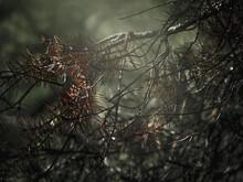 Macro Dettaglio Ramo Spinoso Foglie Pigna Immagine Suggestiva Montagna Stile Naturalistico Albero