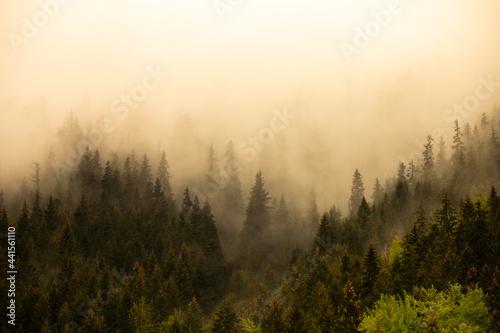 Landscape with fir trees, fog, from Maramures (Transylvania, Romania)