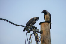 At The End Of The Crow's Pole