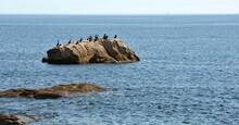 Les Cormorans Sur Le Rocher à Lesconil En Finistère Bretagne France