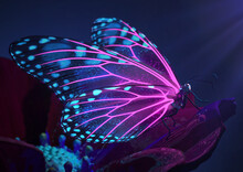 3D Render Of Magical Glowing Neon And Fluorescent Inspirational Butterfly
