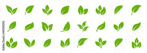 Fotografie, Obraz Set of green leaf icons