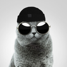 Cool Stylish British Hipster Cat With Fashionable Vintage Round Sunglasses And A Black Hat In The Studio On A Gray Background. Creative Idea And Fashion