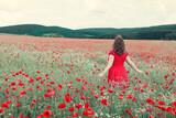Fototapeta Kuchnia - Woman walking through a poppy field in summer.