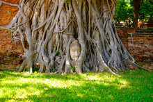 Ayutthaya, Thailand, 11 September 2020: Buddah Head Statue In The Tree Root, The Famous Place In Ayutthaya Thailand,signature Place Of Wat Mahathat