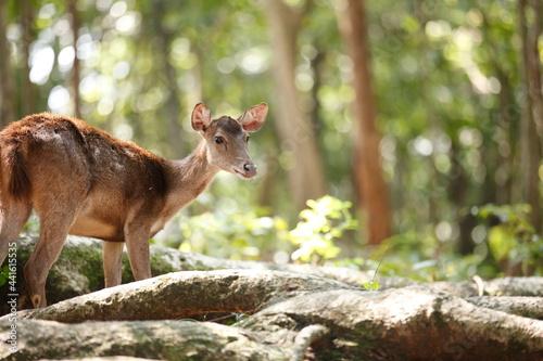 Fotografie, Tablou 鹿