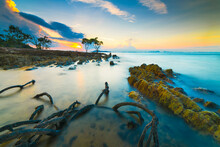 Rocks And Roots Of Mangrove Trees Decorate Tanjung Pinggir Beach, Batam Island