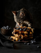 Cat With Waffle Dessert On Table