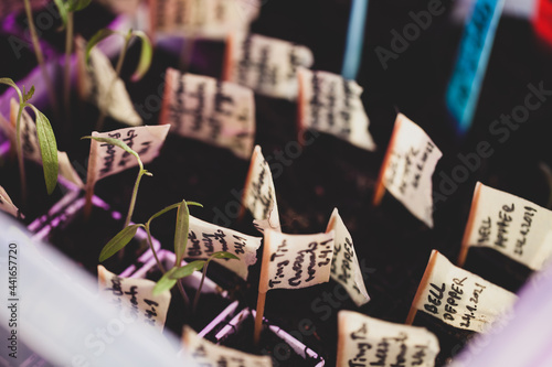 Fotografie, Obraz seedlings