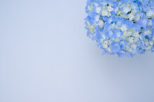Blue Hydrangea Flowers In A Vase On A Blue Surface