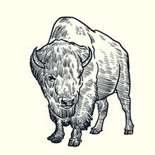 Vintage Hand Drawn Bison