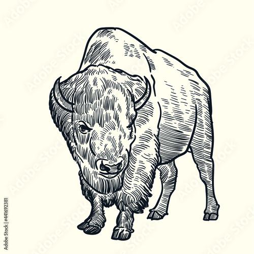 Vintage hand drawn bison Fotobehang