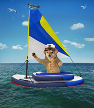 A Beige Dog In A Captain Hat Sits In A Inflatable Sailing Dinghy On The Sea.