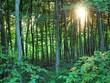 Las w promieniach zachodzącego słońca