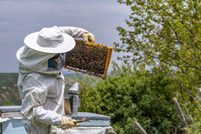 Beekeeper Man Is Working With Beehives Wearing Protective Clothing