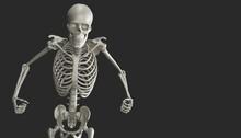Angry Skeleton Model 3d Render