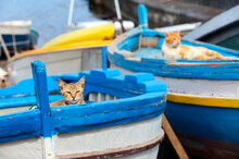 Two Cats In Colourful Boat On Sunset In Sicily, Italy. Two Kittens Hiding In The Boat