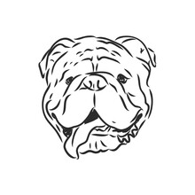 Line Art Of French Bulldog With Three Difference Of Face