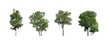The Collection Of Trees, Set Of Isolated Trees On White Background