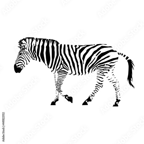 plains zebra with stripes (Equus quagga) from side silhouette Fototapeta