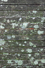 Old Mossy Wood